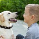 Наиболее подходящие породы собак для детей