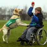 Собаки терапевты