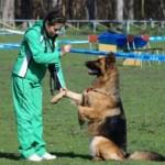 Основные ошибки в дрессировке собак