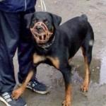 Собаки уголовники