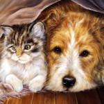 Собака и кошка в доме