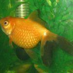 Болезни и лечение аквариумных рыб