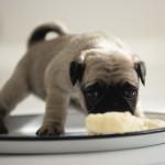 Рацион щенков первого года жизни