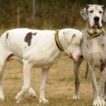 Cлепота у собак