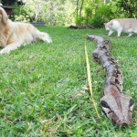 Если змея укусила собаку