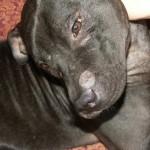 Вакцина от герпеса у собак – гарантия успешного разведения