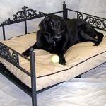 Выбираем спальное место для собаки