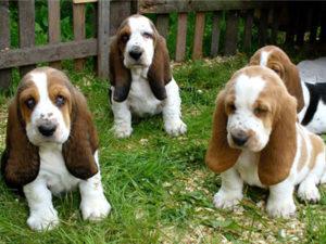 buy_puppy_1