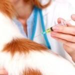 Как часто собаке нужно делать прививки?