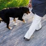 Как определить характер по своей собаке?