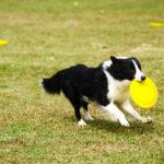 Популярные игры с собакой