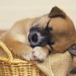 Как научить собаку спать на своем месте