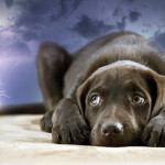 Фобии у собак