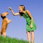 Отдавать собаку на дрессировку или самостоятельно с ней заниматься?