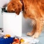 Как отучить собаку подбирать с земли посторонние предметы