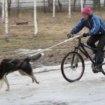 Спорт с собакой