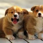 Выбираем интернет магазин товаров для животных