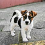 Выбор щенка: на что обратить внимание