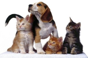 Интернет-магазин товаров для собак