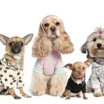 Одежда для собак – лучшая защита для питомца