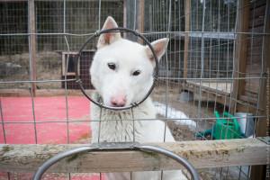 Особенности собачьих клеток и их использование