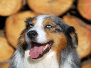 Правила и советы по выбору щенка