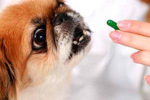 pillsdog-1