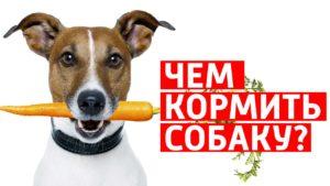Чем должны питаться собаки с чувствительным пищеварением?