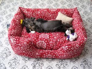 Лежанка собаки как уютный и комфорт дом животного