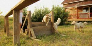 Передержка собак – особенности услуги и её характеристики