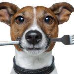 Корм для собак – лучший источник энергии