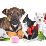 Зоомагазин – лучший друг для домашних животных