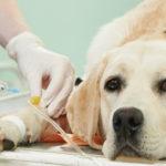 Стерилизация собак в современных условиях