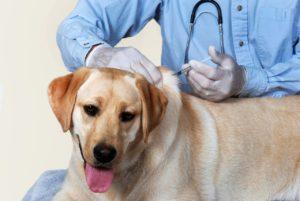Вакцины и прививки для собак
