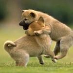 Поведение и воспитание щенков в зависимости с возрастом