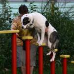 10 правил дрессировки вашей собаки