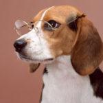 Новые технологии для собак