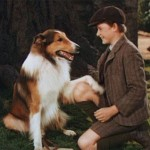 Собаки-актеры – кто они?