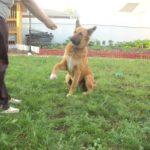 «Зоошеф» – наш проверенный помощник в деле воспитания уже второй собаки