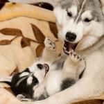 Как определить состояние здоровья собаки