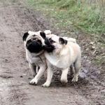 Влияет ли порода на поведение собаки?