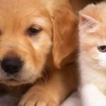 Поведение собаки: рефлексы и инстинкты