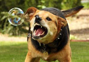 dog-hydrophobia_big