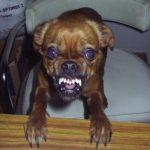 Нервное расстройство и агрессия у собак