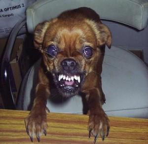 mad-dog-bite-weird-home-remedies
