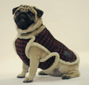 lumberjack_pug