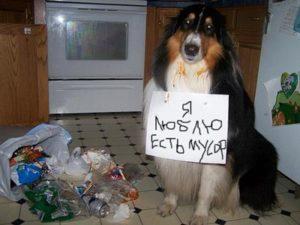 dog-punishment