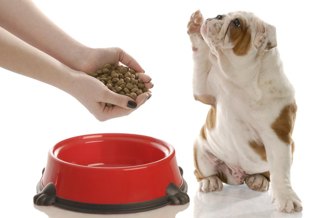 Картинки по запросу кормление собак