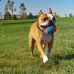 Как правильно выгуливать собаку?