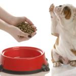 Как выбрать корм для собак. Виды кормов